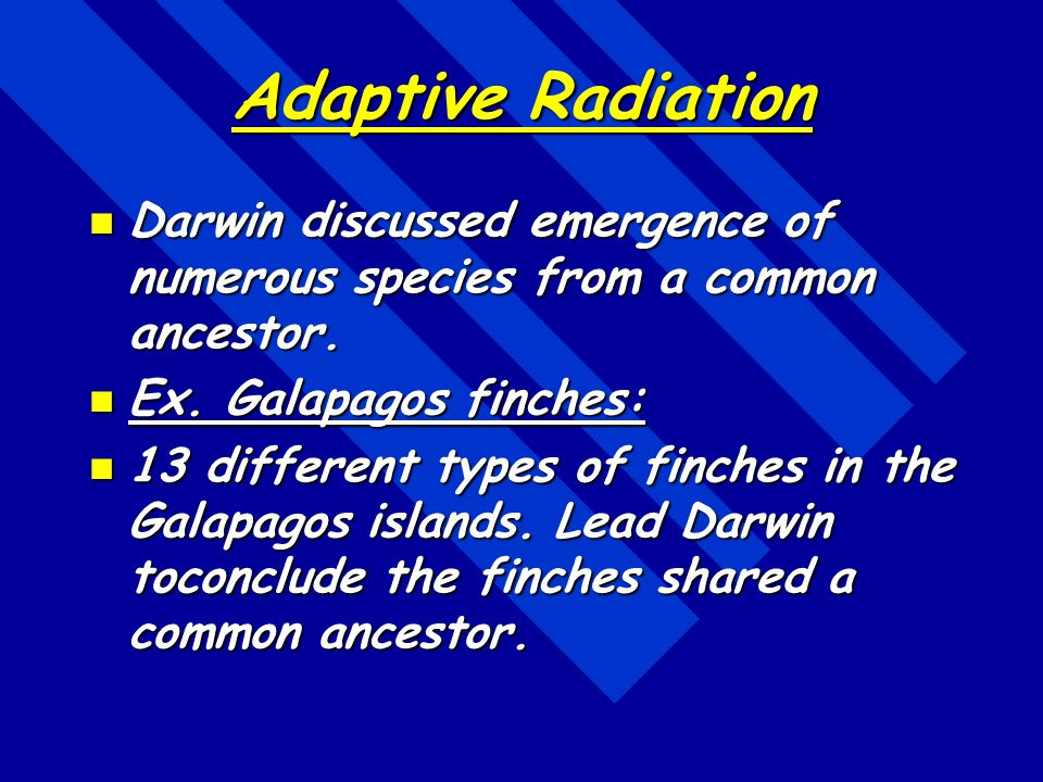Adaptive Radiation Darwin discussed emergence of numerous species from a common ancestor. Ex. Galapagos finches: