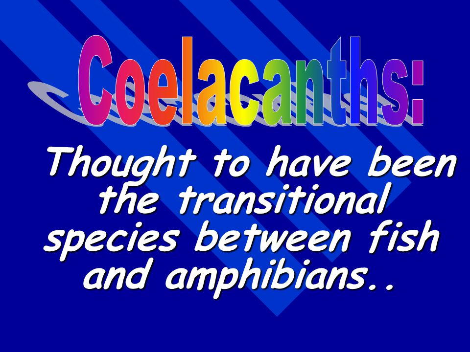 Coelacanths: Thought to have been the transitional species between fish and amphibians..