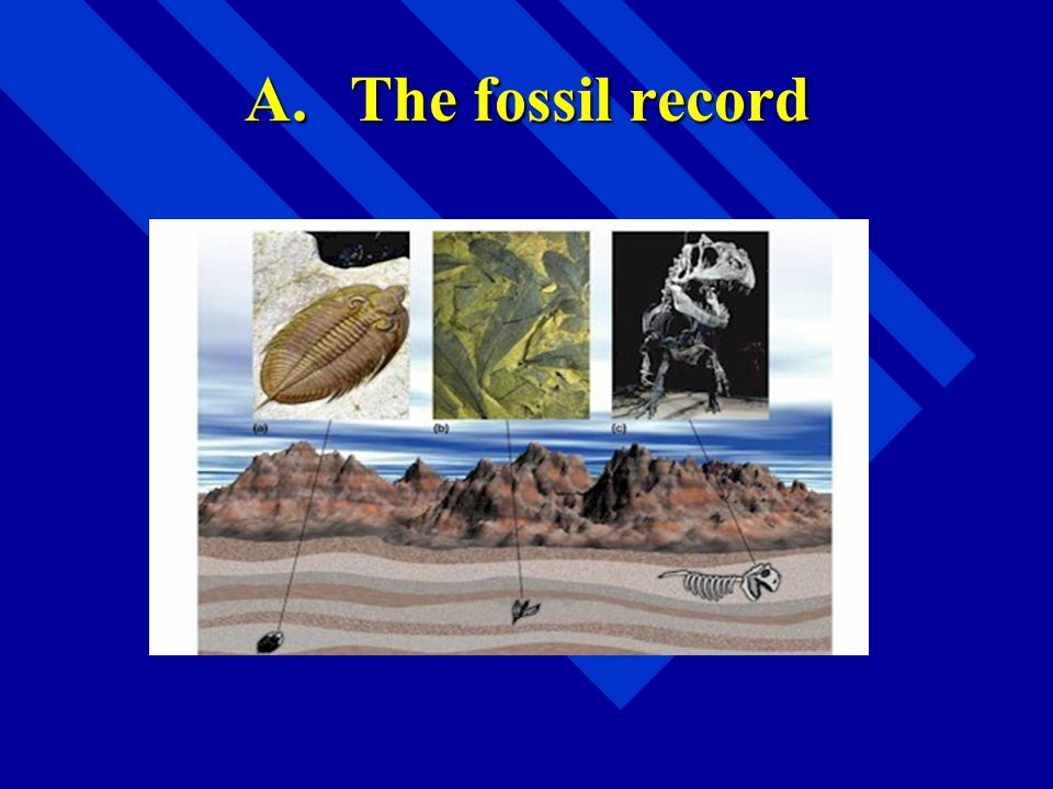 A. The fossil record