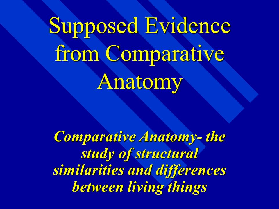 Supposed Evidence from Comparative Anatomy