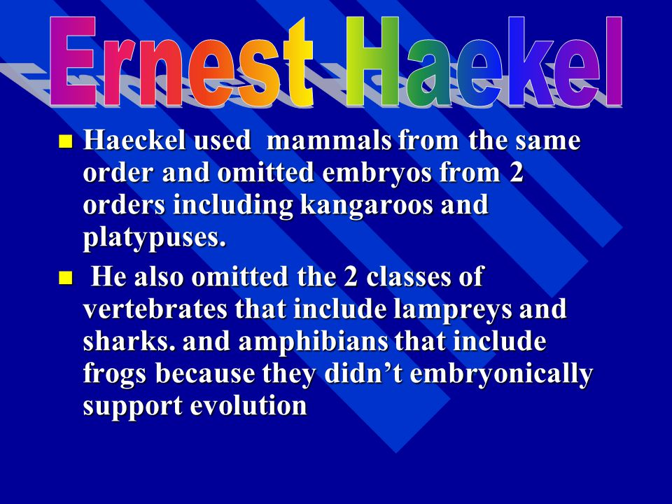 Ernest Haekel Haeckel used mammals from the same order and omitted embryos from 2 orders including kangaroos and platypuses.