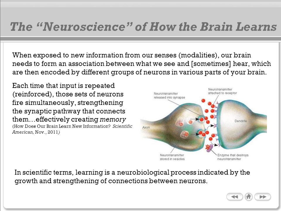 The Neuroscience of How the Brain Learns