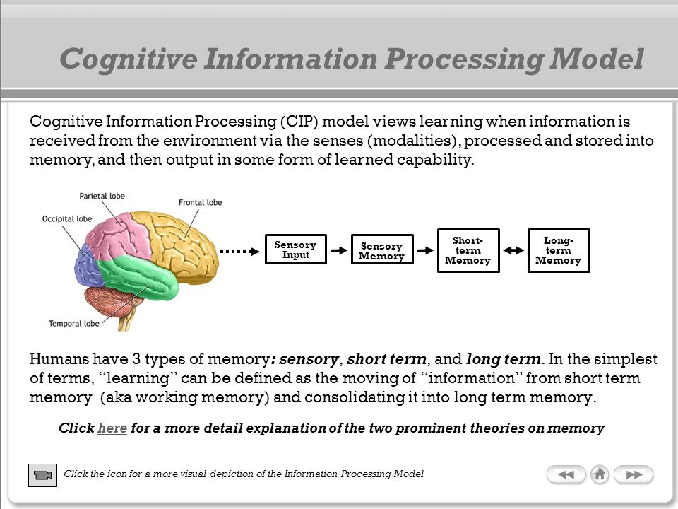 Cognitive Information Processing Model