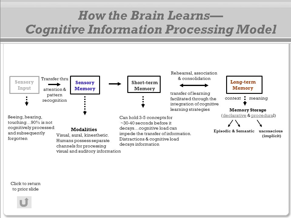 How the Brain Learns— Cognitive Information Processing Model