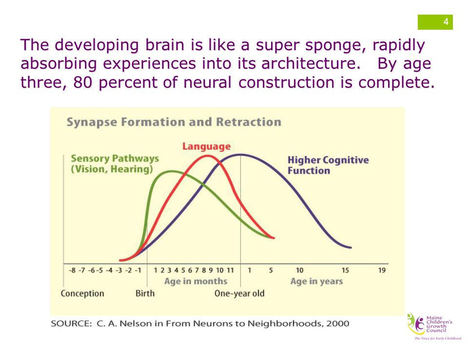 The developing brain is like a super sponge, rapidly absorbing experiences into its architecture.