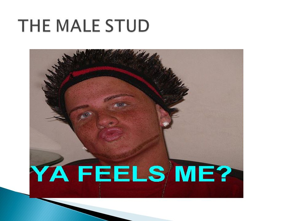 THE MALE STUD