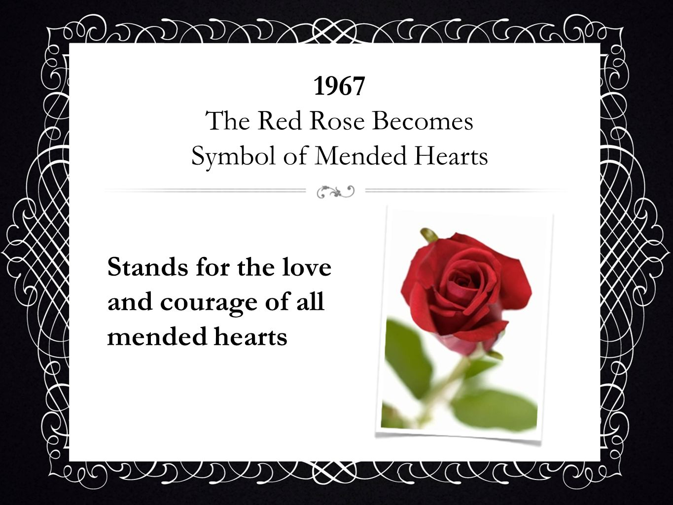 1967 The Red Rose Becomes Symbol of Mended Hearts