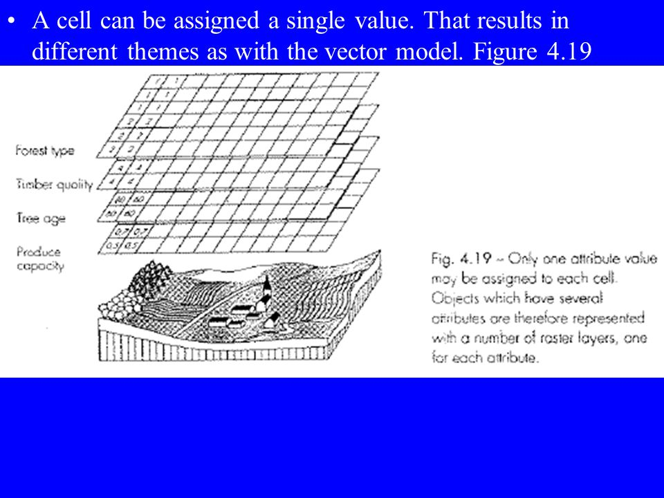 A cell can be assigned a single value