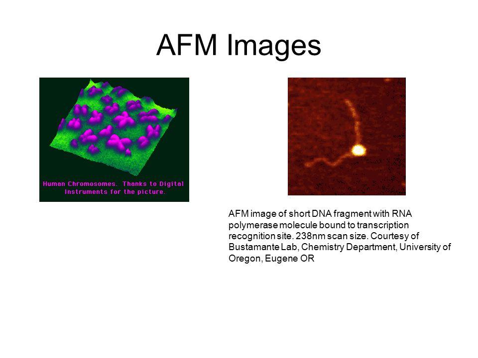 AFM Images