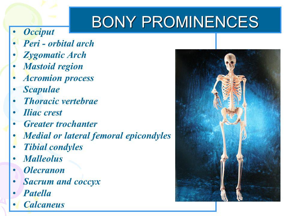 BONY PROMINENCES Occiput Peri - orbital arch Zygomatic Arch