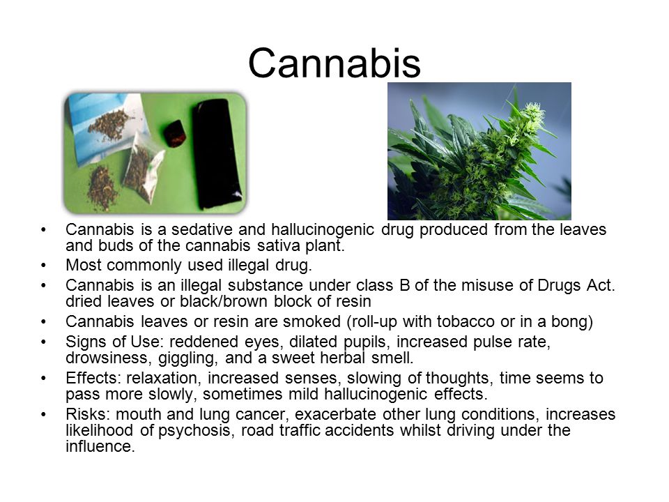 Cannabis Cannabis is a sedative and hallucinogenic drug produced from the leaves and buds of the cannabis sativa plant.
