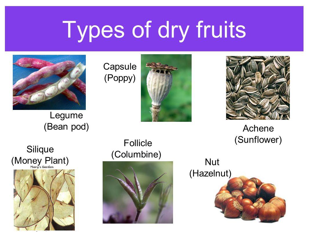 Types of dry fruits Capsule (Poppy) Legume (Bean pod) Achene