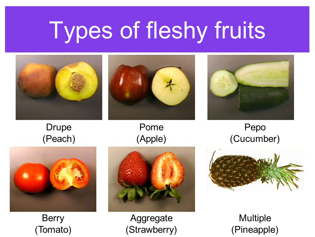 Types of fleshy fruits Drupe (Peach) Pome (Apple) Pepo (Cucumber)