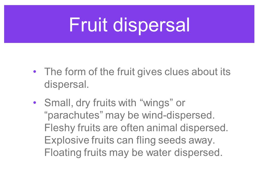 Fruit dispersal The form of the fruit gives clues about its dispersal.