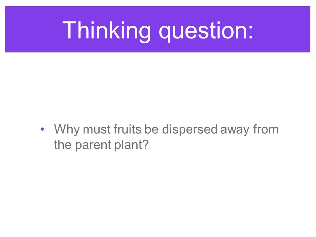 Thinking question: Why must fruits be dispersed away from the parent plant