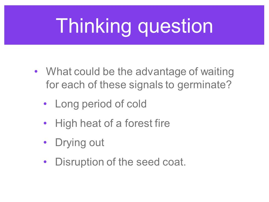Thinking question What could be the advantage of waiting for each of these signals to germinate Long period of cold.