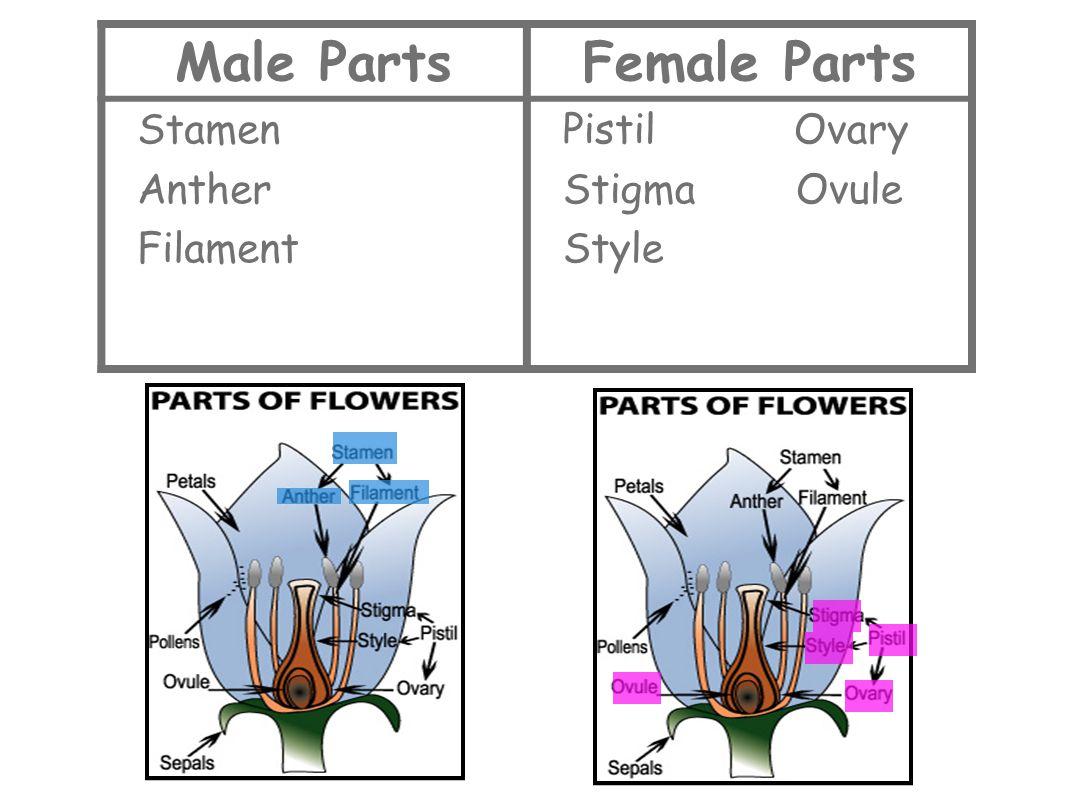 Male Parts Female Parts