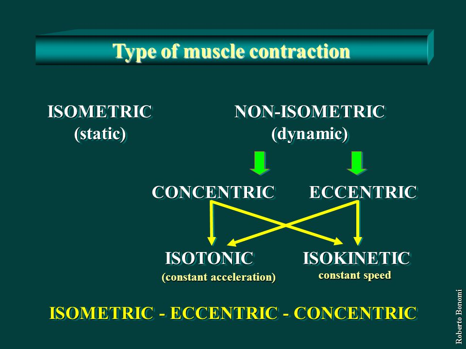 Type of muscle contraction