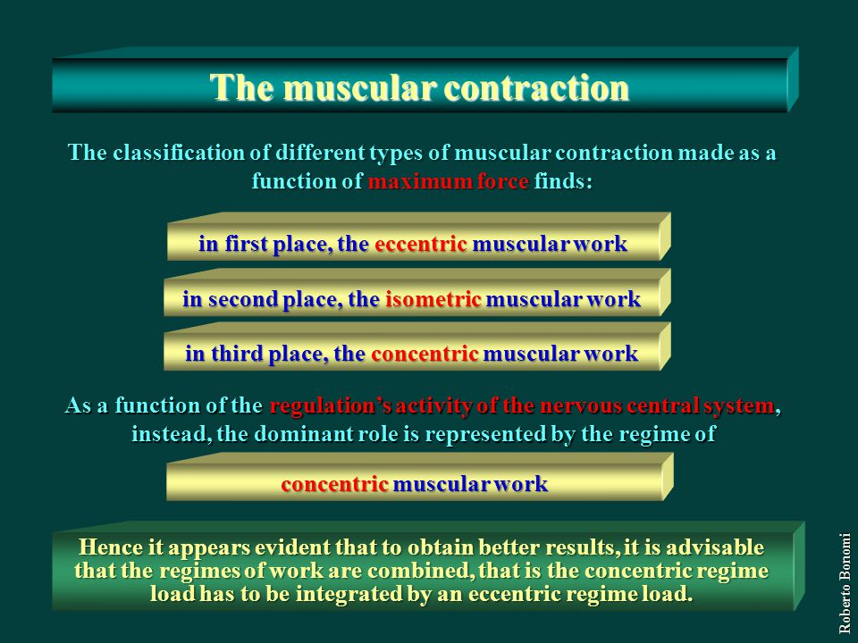 The muscular contraction