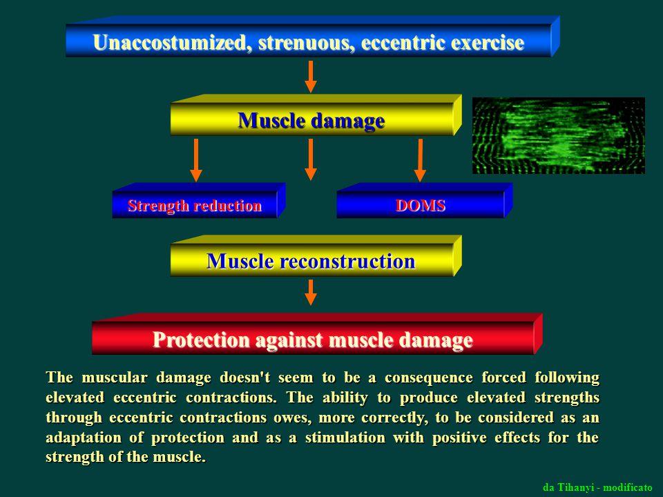 Unaccostumized, strenuous, eccentric exercise