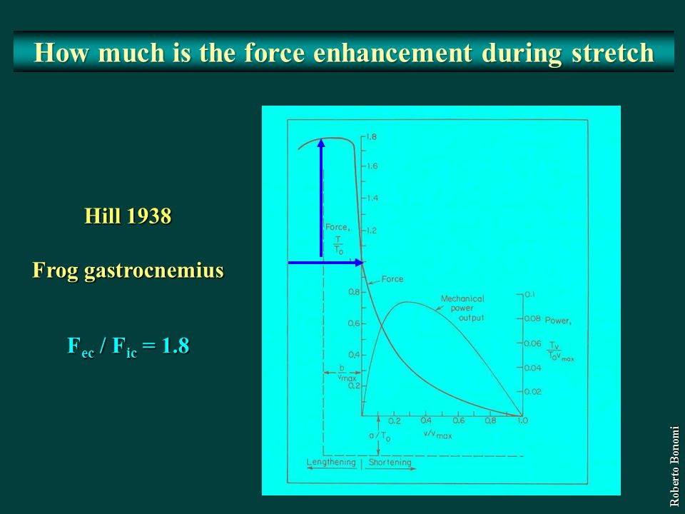 How much is the force enhancement during stretch