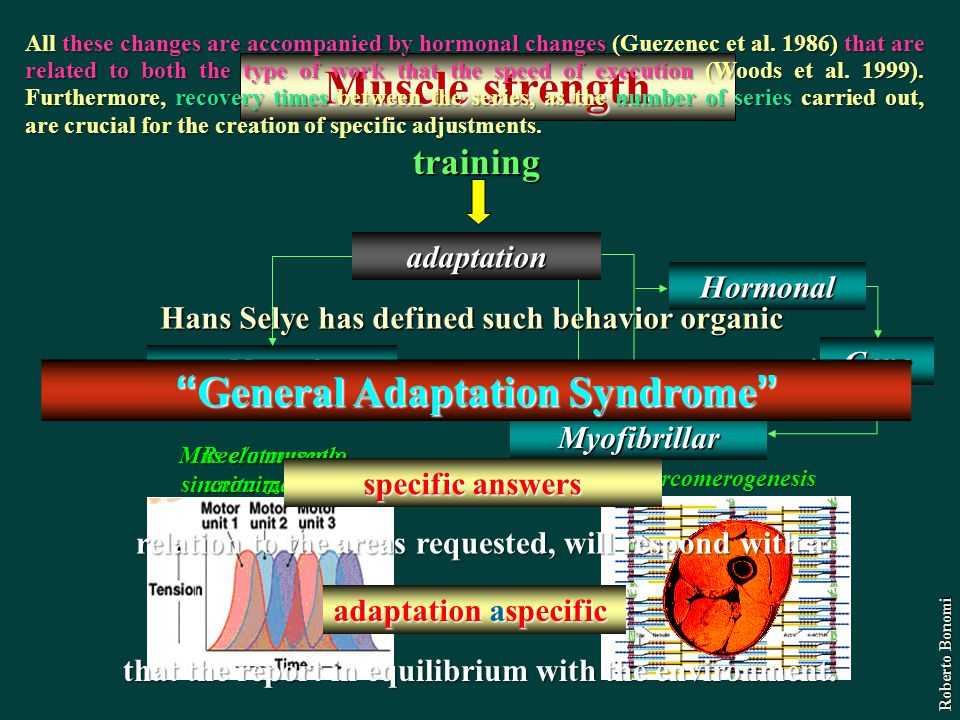 Muscle strength General Adaptation Syndrome training adaptation