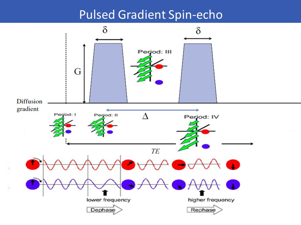 Pulsed Gradient Spin-echo