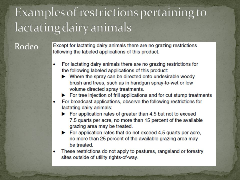 Examples of restrictions pertaining to lactating dairy animals