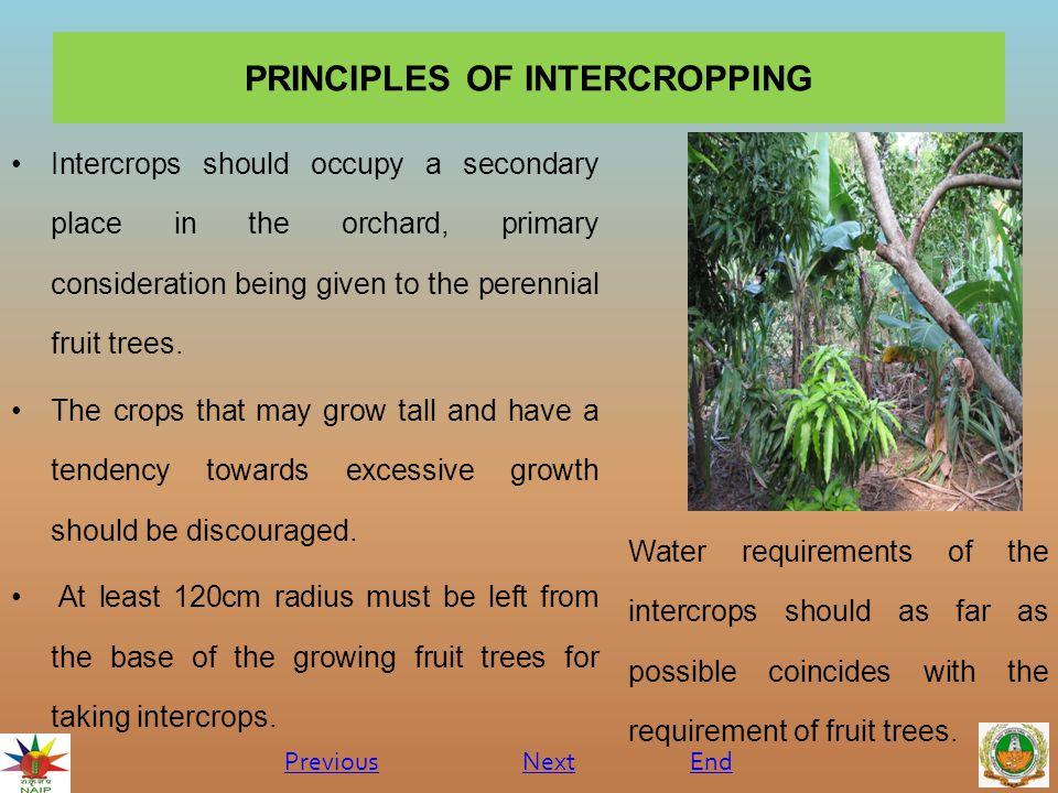 PRINCIPLES OF INTERCROPPING