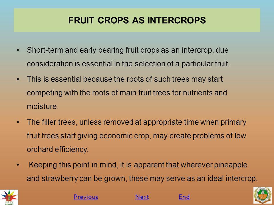 FRUIT CROPS AS INTERCROPS
