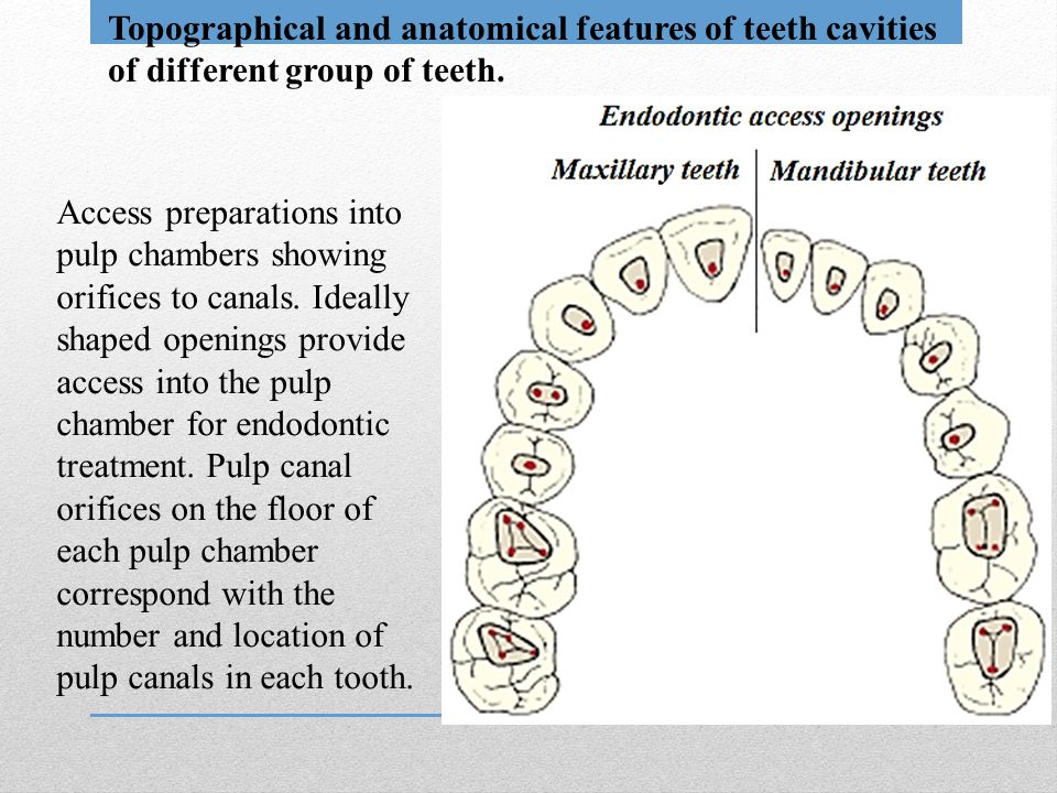 Topographical and anatomical features of teeth cavities of different group of teeth.