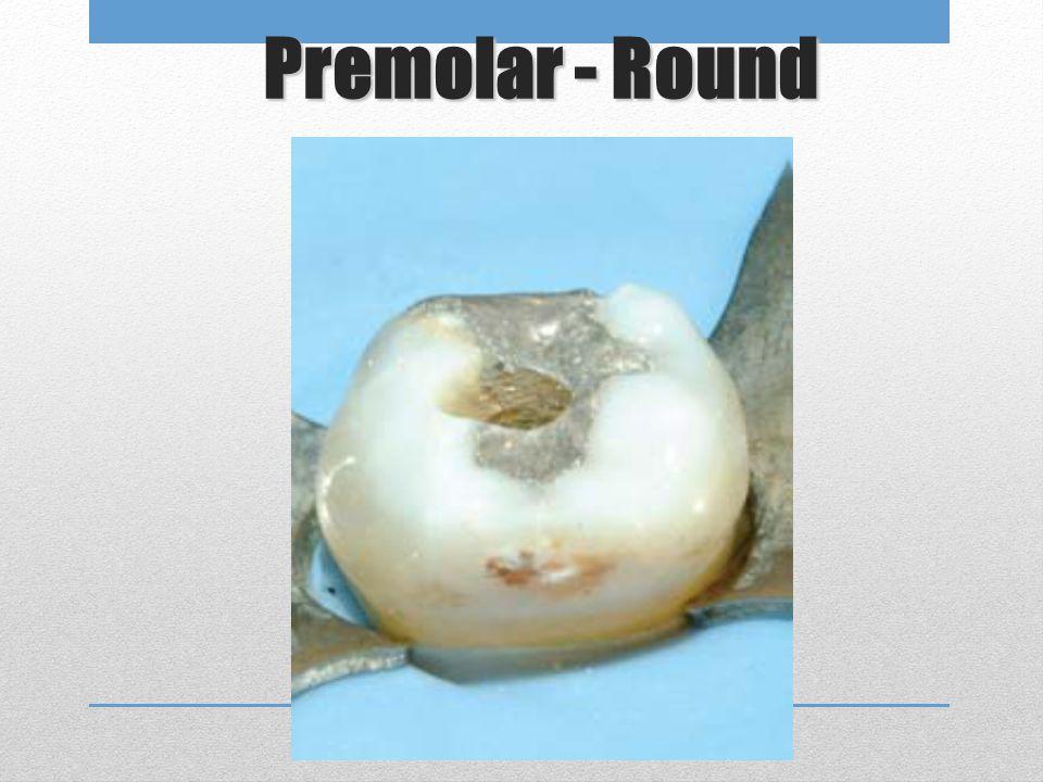 Premolar - Round
