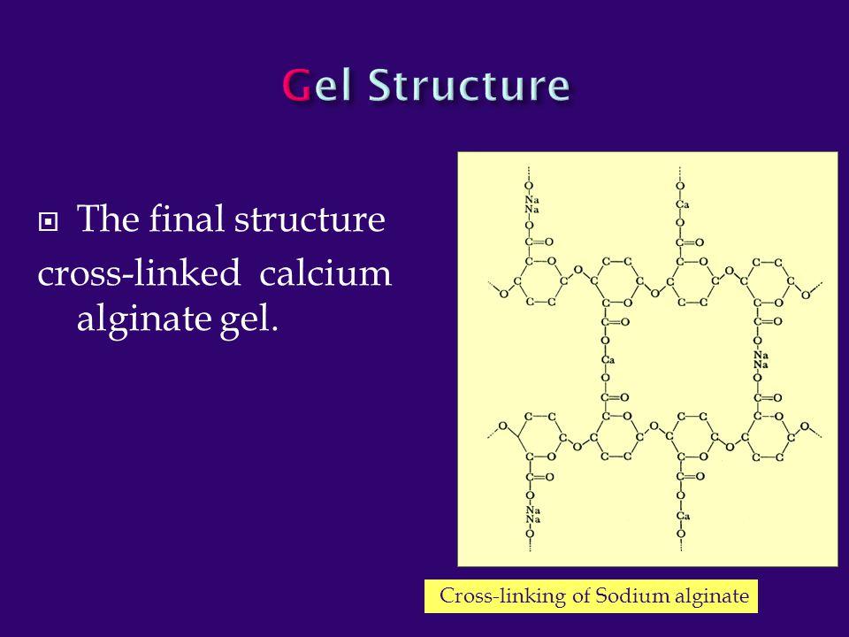 Gel Structure The final structure cross-linked calcium alginate gel.