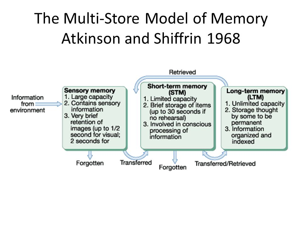 The Multi-Store Model of Memory Atkinson and Shiffrin 1968