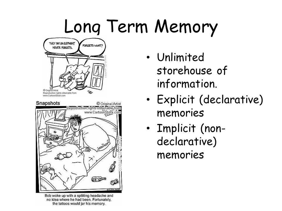 Long Term Memory Unlimited storehouse of information.