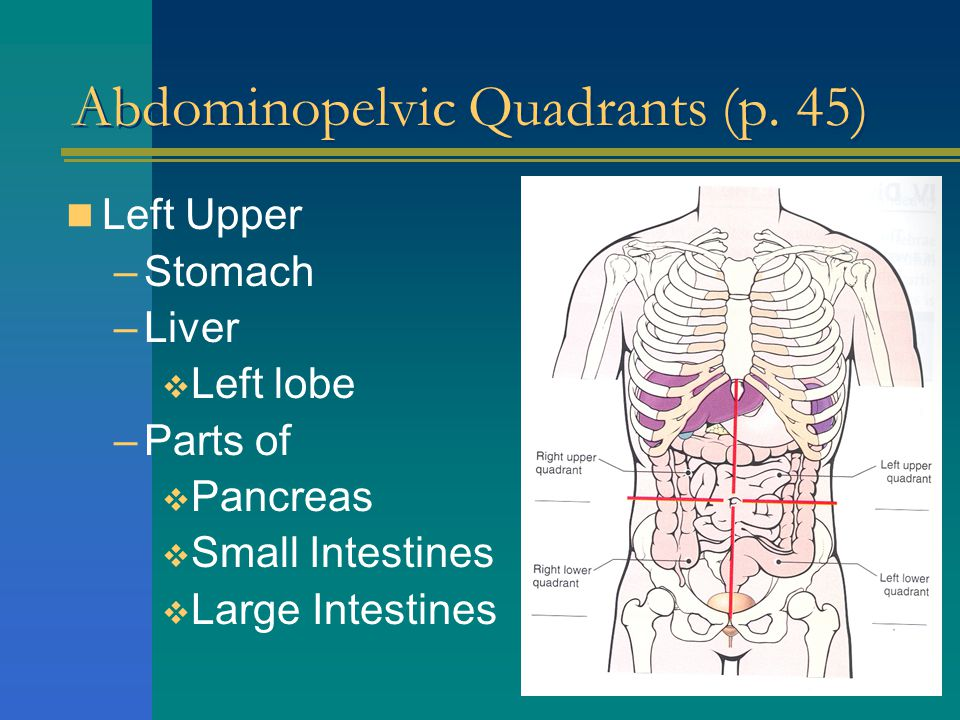 Abdominopelvic Quadrants (p. 45)