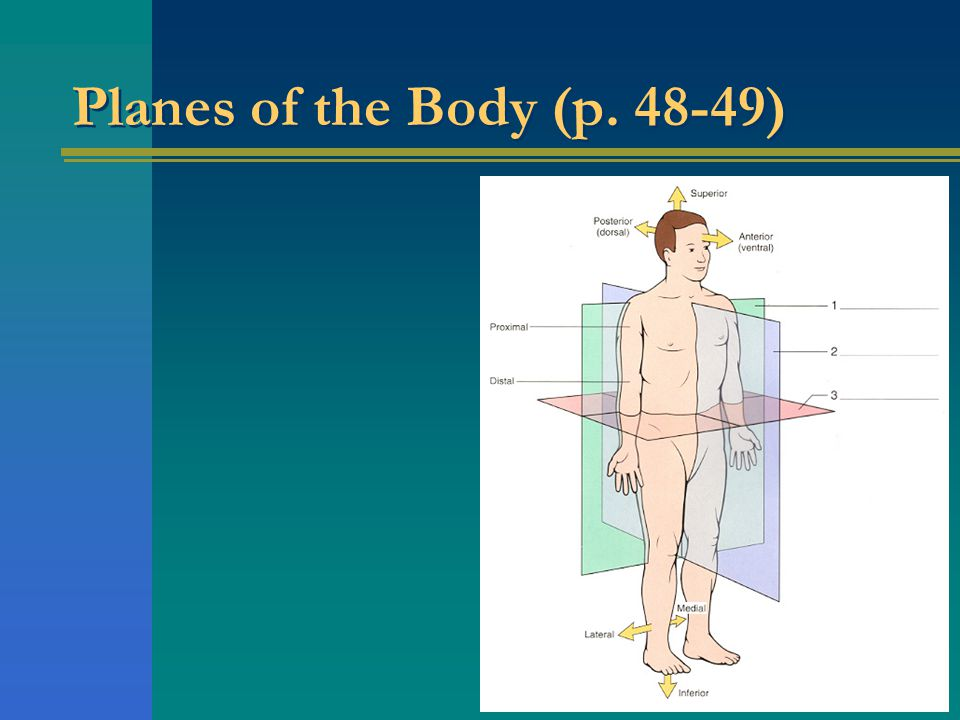 Planes of the Body (p. 48-49)
