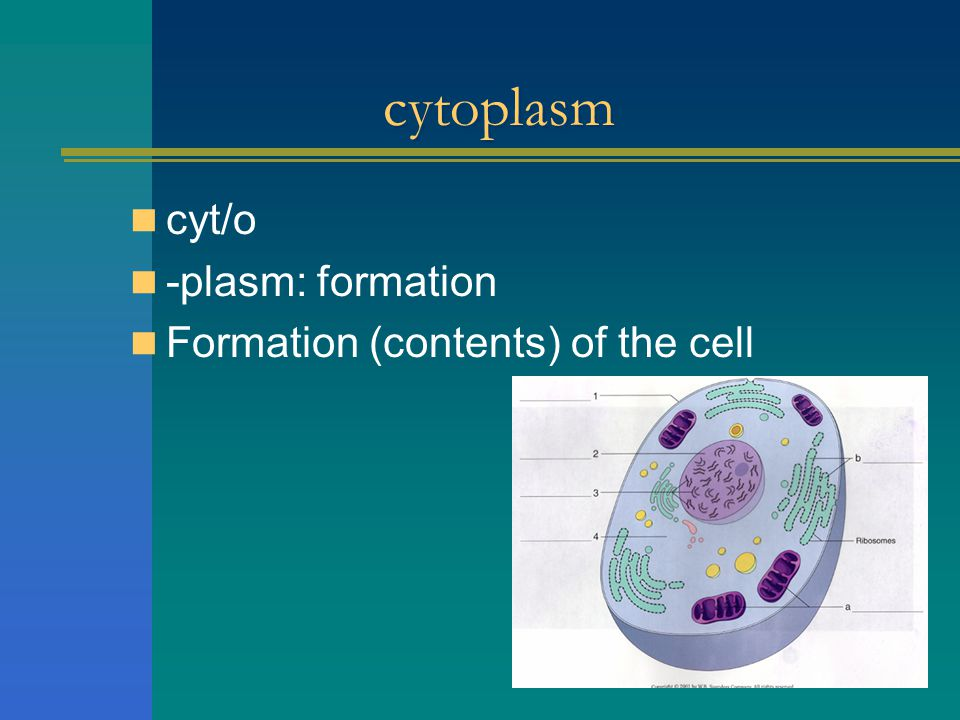 cytoplasm cyt/o -plasm: formation Formation (contents) of the cell
