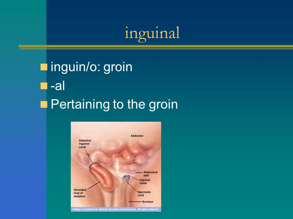 inguinal inguin/o: groin -al Pertaining to the groin