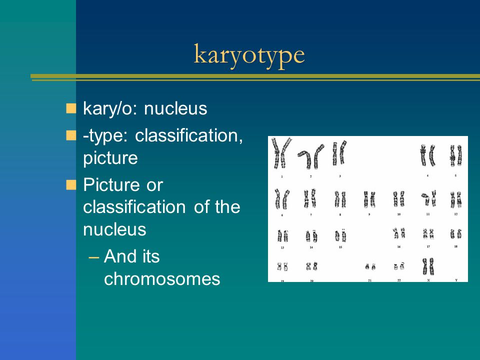 karyotype kary/o: nucleus -type: classification, picture