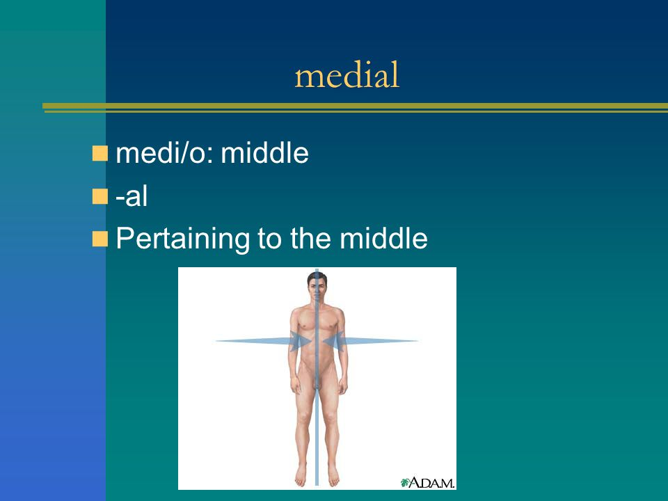 medial medi/o: middle -al Pertaining to the middle