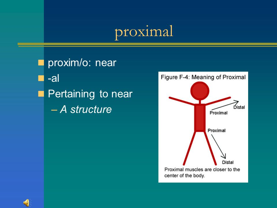 proximal proxim/o: near -al Pertaining to near A structure