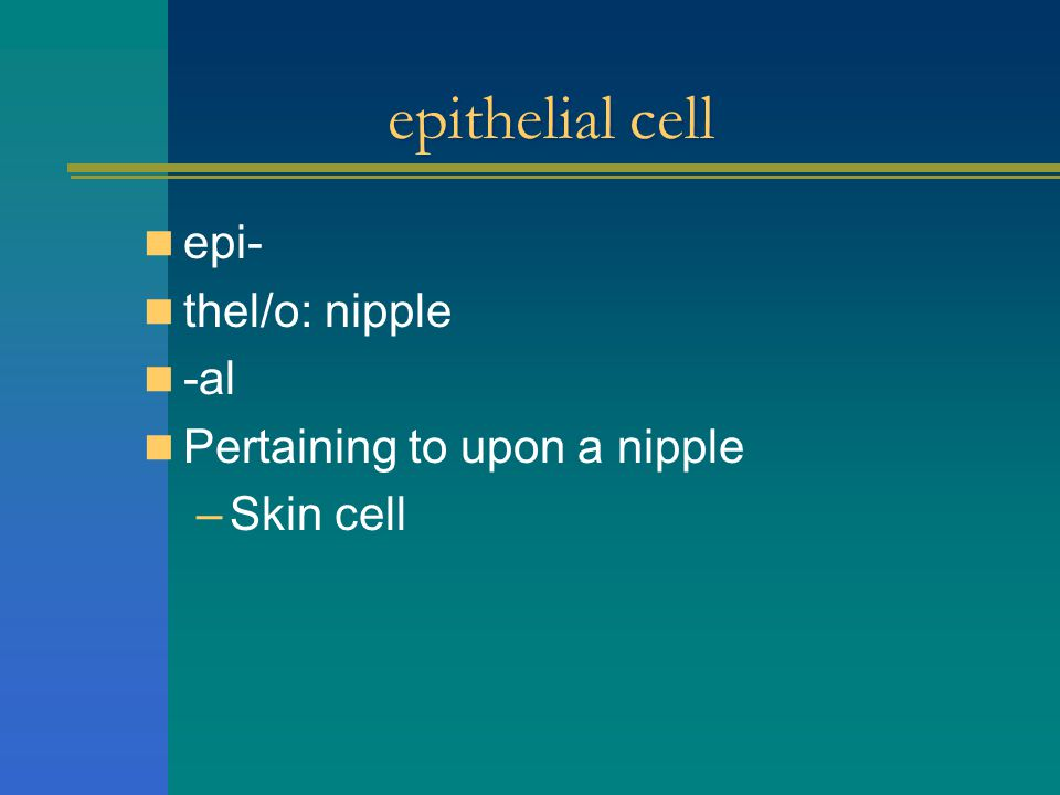 epithelial cell epi- thel/o: nipple -al Pertaining to upon a nipple