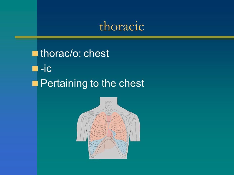 thoracic thorac/o: chest -ic Pertaining to the chest
