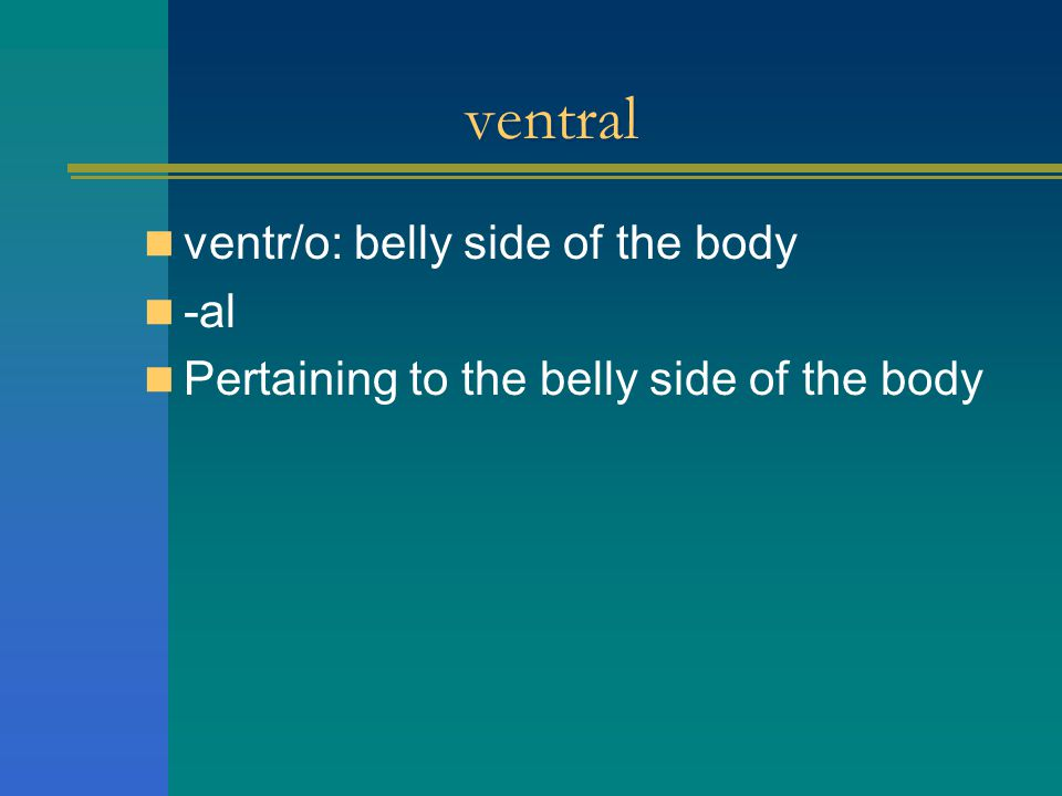 ventral ventr/o: belly side of the body -al