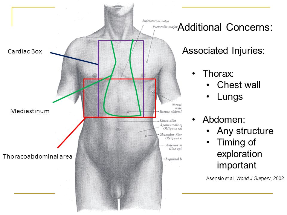 Additional Concerns: Associated Injuries: Thorax: Chest wall Lungs