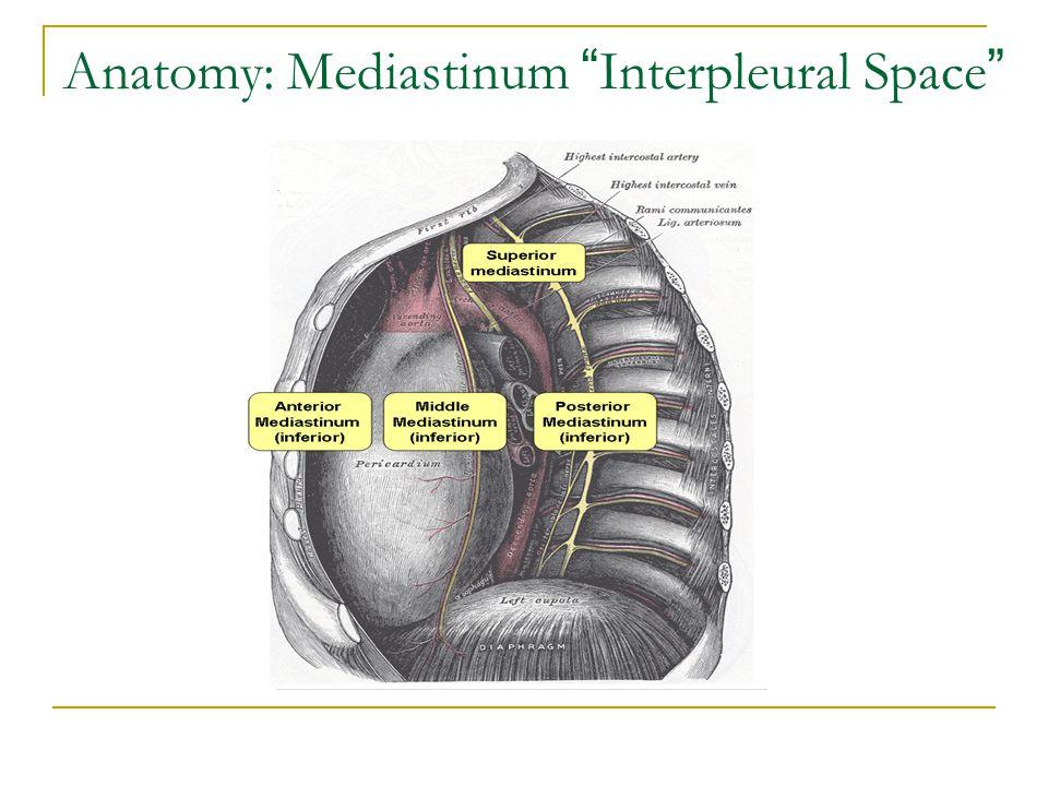Anatomy: Mediastinum Interpleural Space