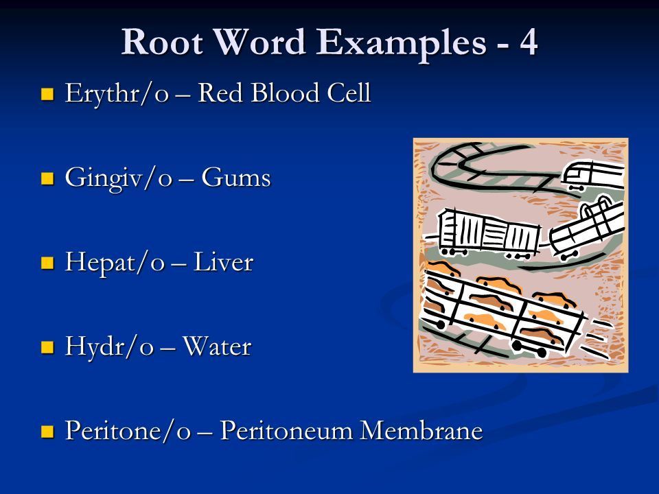 Root Word Examples - 4 Erythr/o – Red Blood Cell Gingiv/o – Gums