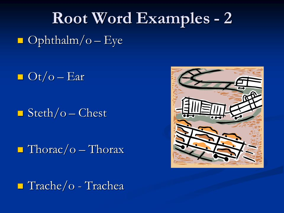 Root Word Examples - 2 Ophthalm/o – Eye Ot/o – Ear Steth/o – Chest