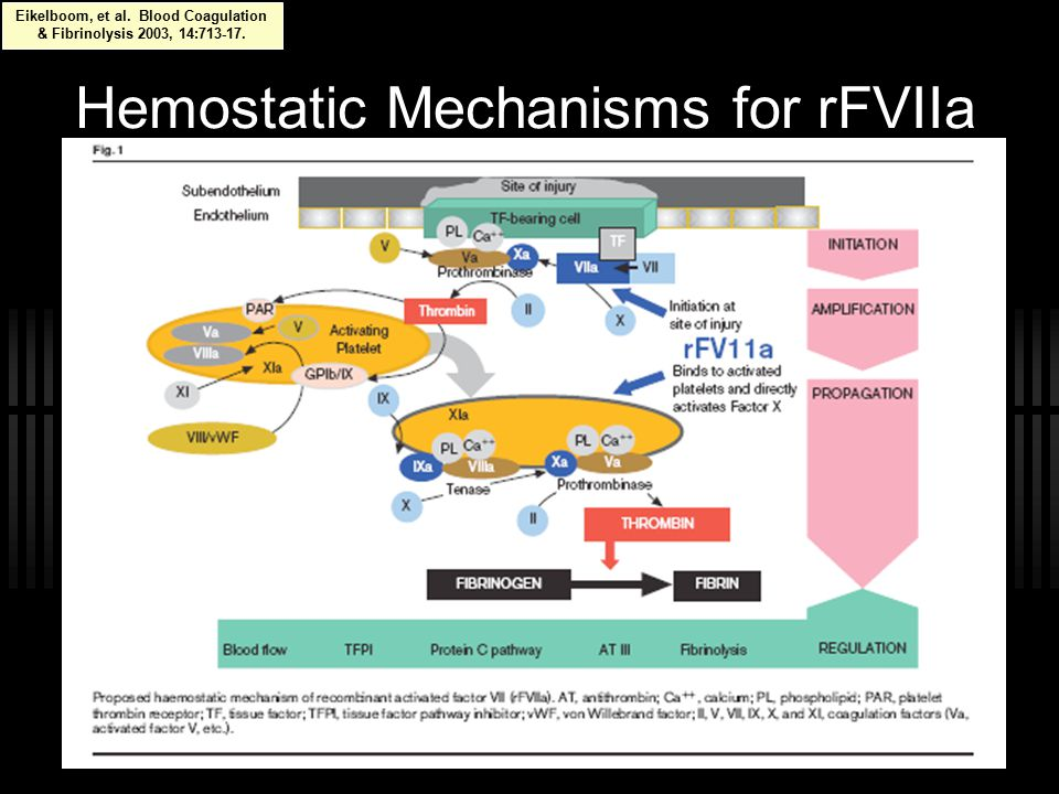 Hemostatic Mechanisms for rFVIIa